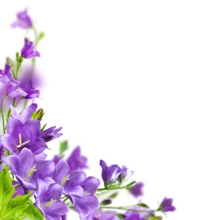 ramos-de-flores-de-colores-purpura