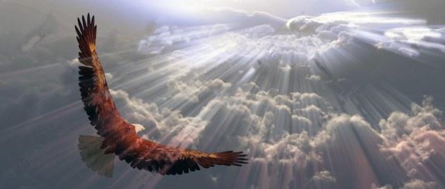 11799885-guila-en-vuelo-por-encima-de-las-nubes-que-Foto-de-archivo