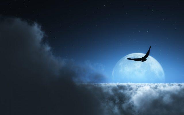 aguila-volando-en-la-noche
